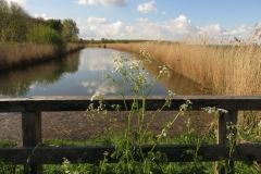 landschap HW (22)