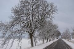 landschap HW (27)